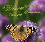 Pillangóvarázs - Pillangóröptetés